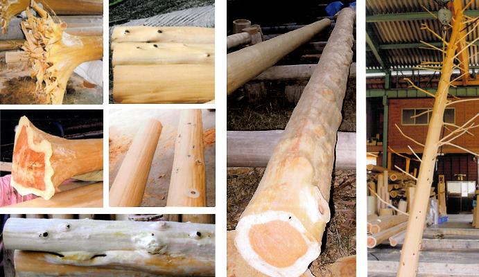 節の有無、二股の部分、特徴的なこぶ、鉢(根元)の有無、枝付、根付など、さまざまな素材をご用意しております。